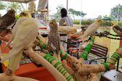 Cockatiel, Burung Peliharaan yang Tak Butuh Kandang