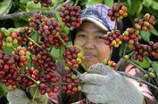 Ini Rekomendasi Kopi Terbaik Indonesia yang Harus Anda Coba