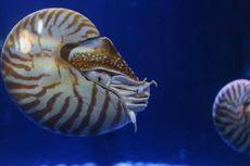 6 Hewan Laut Unik nan Langka di Jakarta Aquarium