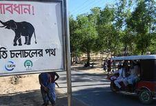 Tiga Anak Rohingya Tewas Diinjak Gajah di Hutan Banglades
