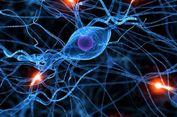 Peneliti Temukan Cara Penggolongan Baru untuk Sel Otak