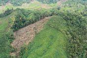Perusahaan Nakal Berpotensi Hilangkan 20.000 Hektar Hutan Sumbar