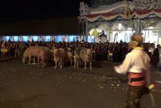 Tujuh Kebo Bule dan 19 Pusaka Dikirab pada Perayaan Satu Suro di Solo