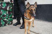 Catherine, Anjing Pendeteksi Bahan Peledak Milik Paspampres