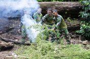TNI-Polri Musnahkan 2 Hektare Ladang Ganja Siap Panen di Nagan Raya