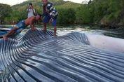 Pindahkan Bangkai Paus, Warga Desa Soleh Minta Bantuan 'Tug Boat'