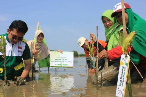 Abrasi Makin Parah, Pantai Beting Bekasi Ditanami Mangrove