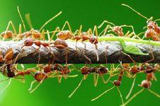 Apa yang Terjadi jika Hutan Kalimantan Tak Punya Semut?