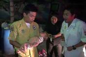 Tukang Sampah Temukan Bayi yang Nyaris Tewas Dikerumuni Semut