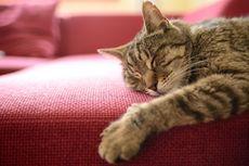 Akibat Digigit Kucing Liar, Seorang Wanita Jepang Meninggal Dunia