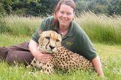'Kecelakaan Ganjil' akibat Harimau, Penjaga Kebun Binatang Tewas