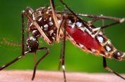 Perangi Zika, Perusahaan Saudara Google Ini Lepaskan 20 Juta Nyamuk