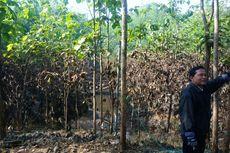 Danau Dadakan di Gunungkidul Surut, Warga Kehilangan Lahan Pertanian
