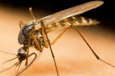 Vaksinasi Massal Malaria Pertama di Dunia Digelar di 3 Negara