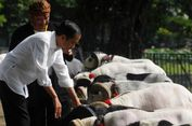 Cerita Jokowi Tergiur Cara Ternak Kambing dengan Omset Ratusan Juta