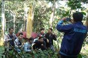Bunga Bangkai Raksasa Mekar di Bengkulu