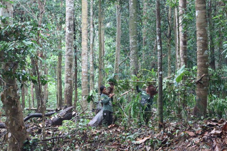 Sekolah orangutan di Balitek KSDA, Samboja, Kalimantan Timur