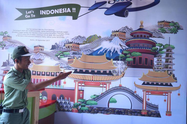 Suasana di dalam Istana Panda Indonesia, Taman Safari Indonesia Bogor, Jawa Barat, Rabu (1/11/2017). Sepasang panda, Cai Tao (jantan) dan Hu Chun (betina) yang berasal dari pengembangbiakan di China Wildlife Conservation Association (CWCA) telah selesai menjalani proses karantina dan akan diperkenalkan untuk publik pada Nov   ember 2017 ini