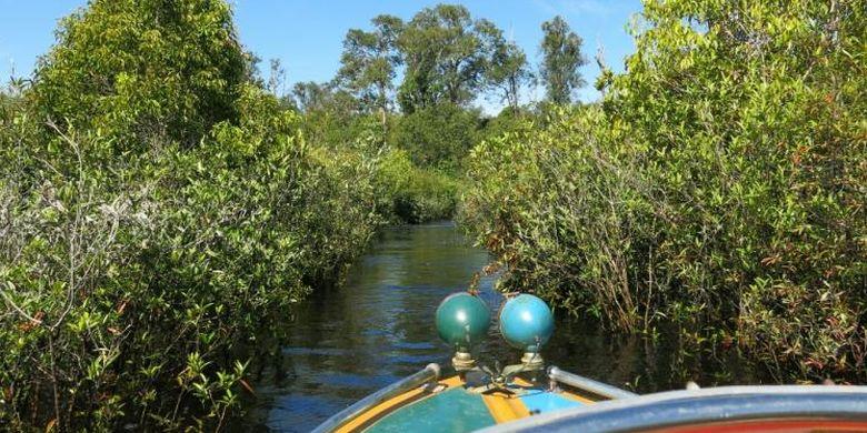 Perjalanan membelah Danau Sentarum menuju Dusun Meliau, Desa Melemba.