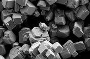 Ilmuwan Temukan Kunci untuk Mempercepat Penyerapan Karbon