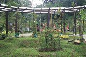Kebun Raya Cibodas Buka Taman Liana, Pamerkan Raspberry Khas Indonesia