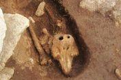 Misterius, Arkeolog Temukan Porpoise yang Dikubur bak Manusia