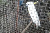 Info dari Medsos, BKSDA Sulsel Amankan Belasan Ekor Satwa yang Dilindungi