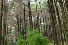 Nikmati Float hingga The Trees & The Wild di Hutan Pinus