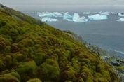 Perubahan Iklim Bikin Antartika Hijau Lagi seperti Zaman Purba