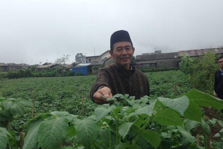 Petani Kentang dari Desa Batur, Kabupaten Banjarnegara, Ahmad Mu?tamir (64).