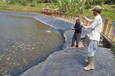 Air Embung Menyusut, Ribuan Ikan Terancam Mati