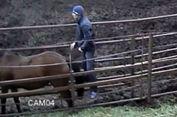 Ketahuan 'Berhubungan' dengan Kuda, Pria Ini Dicampakkan Kekasihnya