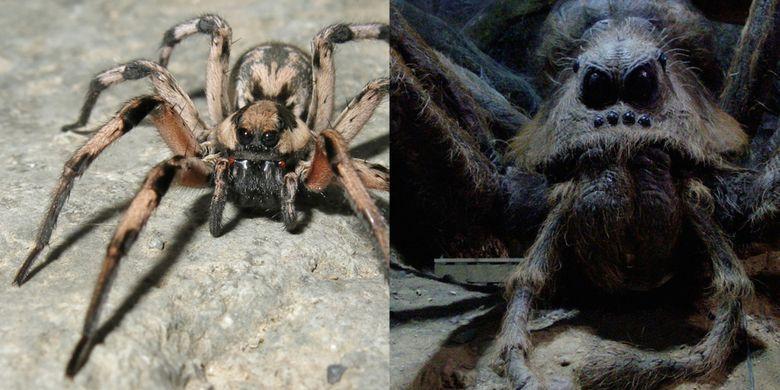 L aragogi (kiri) dan Aragog dari seri Harry Potter (kanan)