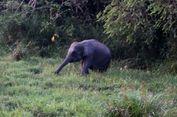 Bengkulu Bentuk Koridor Gajah