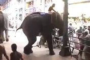 Gajah Mengamuk dalam Festival Keagamaan di India, 1 Tewas