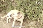 Anjing Selamatkan Seorang Bayi yang Dikubur Hidup-hidup