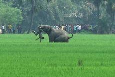 Setiap Hari, Satu Warga India Tewas Diserang Gajah dan Harimau