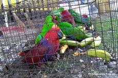 Selundupkan Ratusan Burung Nuri, Seorang Nelayan Ditangkap Polisi
