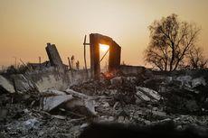 Kebakaran di Kebun Anggur California, Sudah 40 Orang Tewas