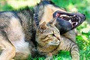 Taiwan Kini Resmi Larang Warganya Santap Daging Anjing dan Kucing