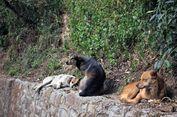 Anjing Liar Curi Bayi dari Rumah Sakit untuk Santapan Anak-anaknya