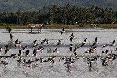 Kisah Burung Migran dan Mangrove dalam Kacamata Anak-anak