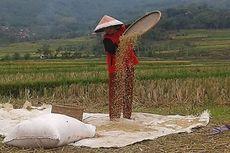 Menteri Pertanian Klaim Tahun Ini Indonesia Bebas Paceklik
