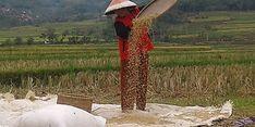 Jawa Barat Bagian Utara Rawan Kekeringan