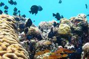 Biomassa Jadi Kunci Jaga Keanekaragaman Hayati Ikan Karang