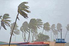 Bagaimana Pohon Palem Tetap Berdiri meski Diterjang Badai?