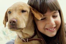 Bagaimana Isi Kepala Seekor Anjing? Sains Mengungkapnya