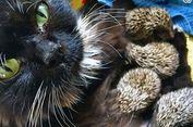 Induknya Mati, 8 Bayi Landak Disusui Seekor Kucing