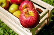 Biar Tak Mudah Sakit, Rajinlah Konsumsi Apel