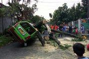 Pohon Setinggi 12 Meter di Bogor Tumbang, Satu Orang Terluka